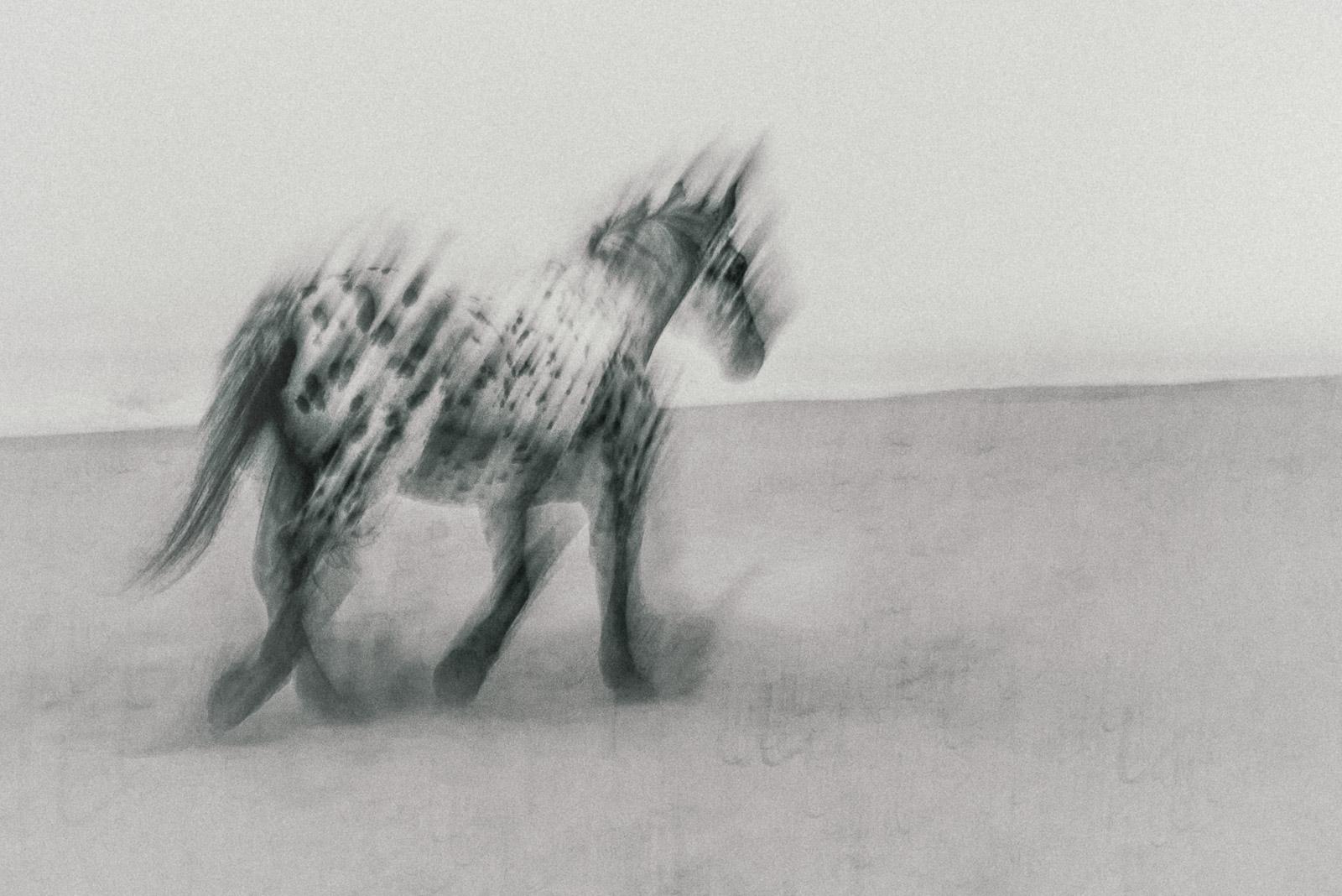 HorseOnBeachI©JitskeSchols