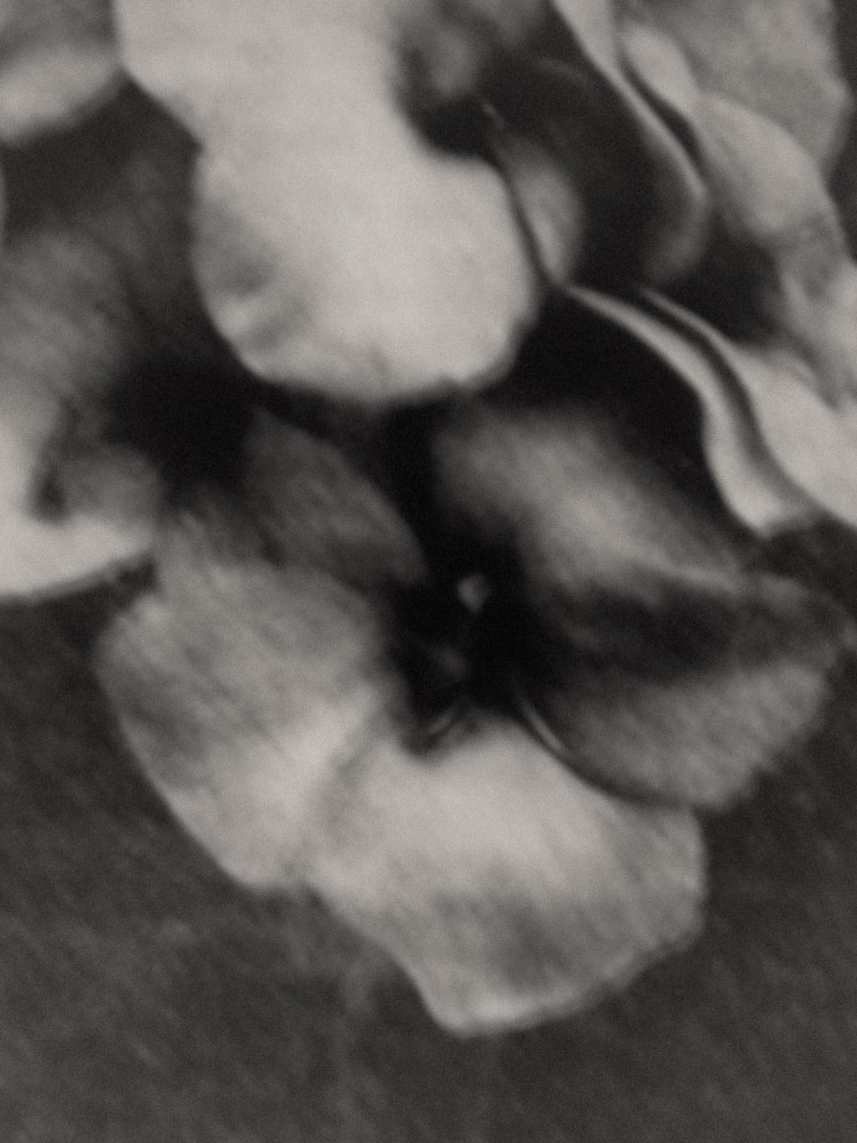 flowers1©JitskeSchols